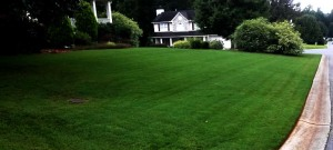 Lawn Care Acworth, Ga - Bermuda Lawn