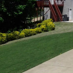 Fertilization and Weed Control Dallas ga