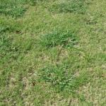 Weed Control Dallas Ga